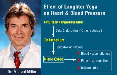 Effets du ydr sur coeur et pression sanguine