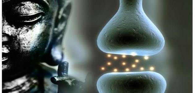Meditation et modification cerveau
